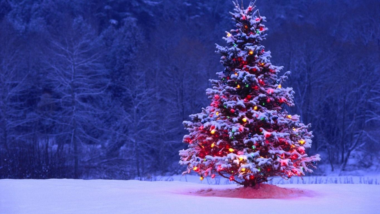 Вистинската приказна за новогодишната елка