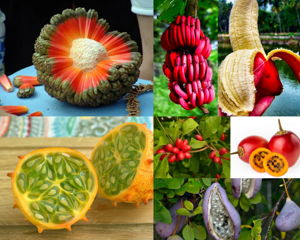 Необични егзотични овошја за кои досега не сте знаеле