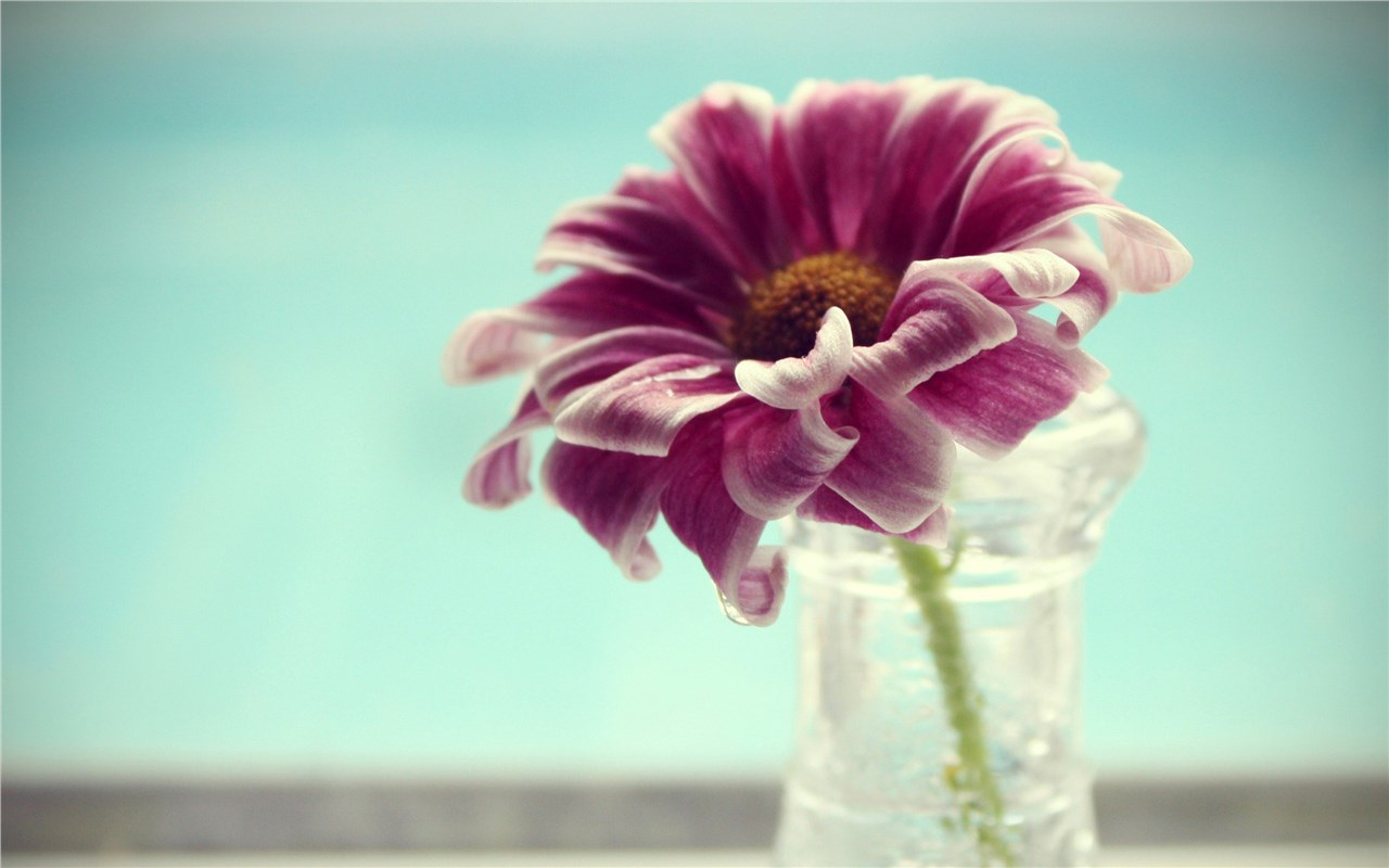 Совети кои ќе ви помогнат цвеќето да го одржувате свежо