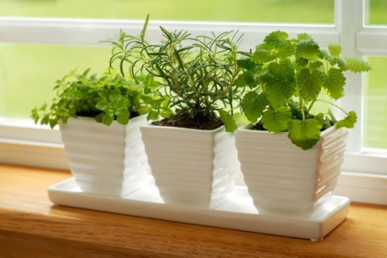 Зеленчук кој може да го одгледувате во вашиот дом