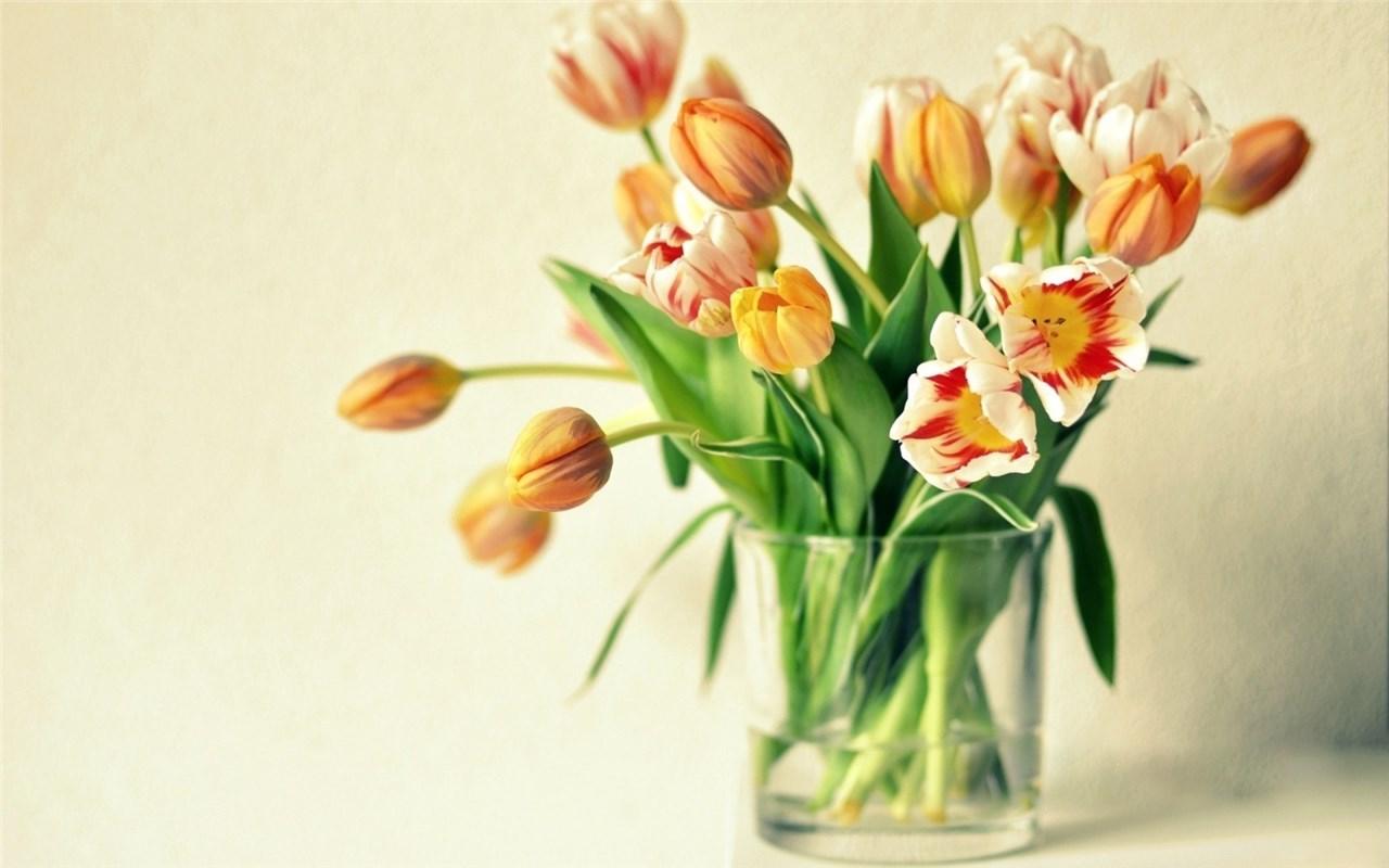 Како да го одржувате цвеќето свежо?