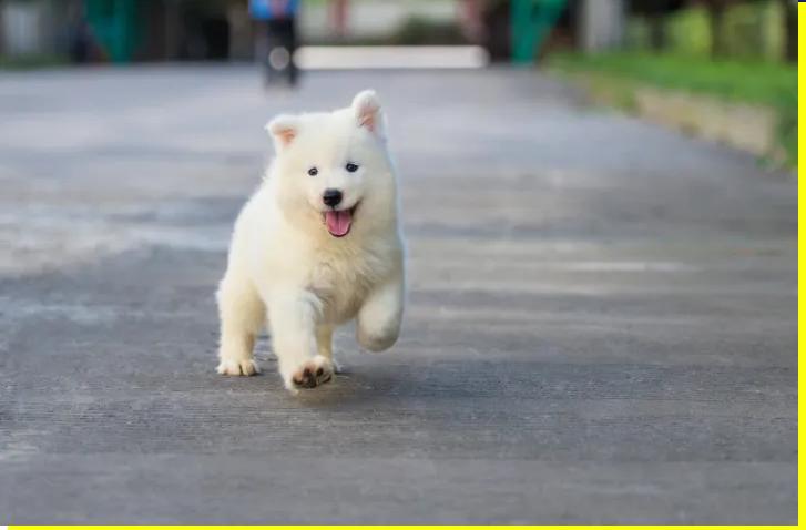 Студиите покажале дека чувањето куче навистина има неверојатни бенефити по човековото здравје